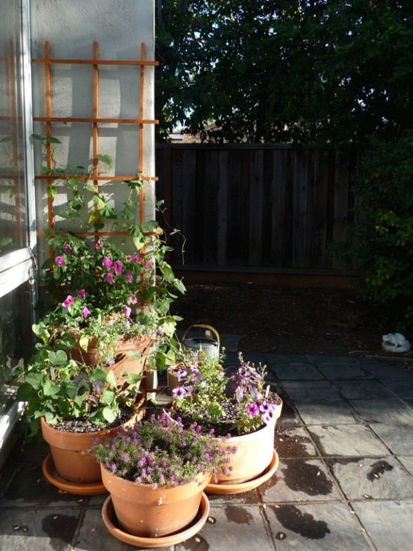 Container-Garden-In-The-Evening