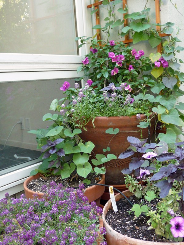 Purple-Container-Garden-In-The-Morning