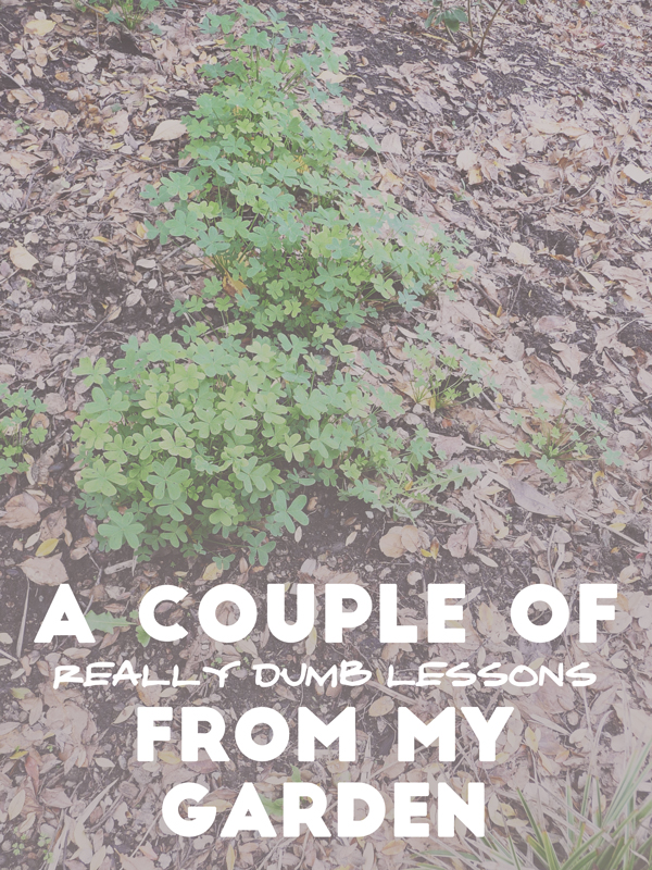 A-Couple-Of-(Really-Dumb)-Lessons-From-My-Garden