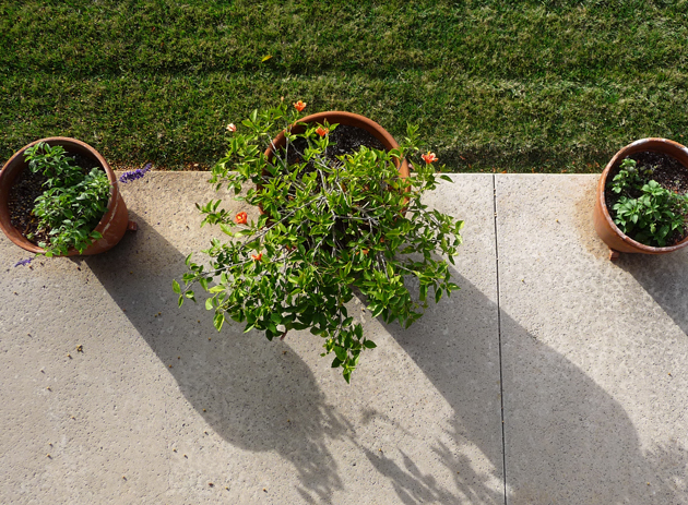 Planter-Pots-From-Above