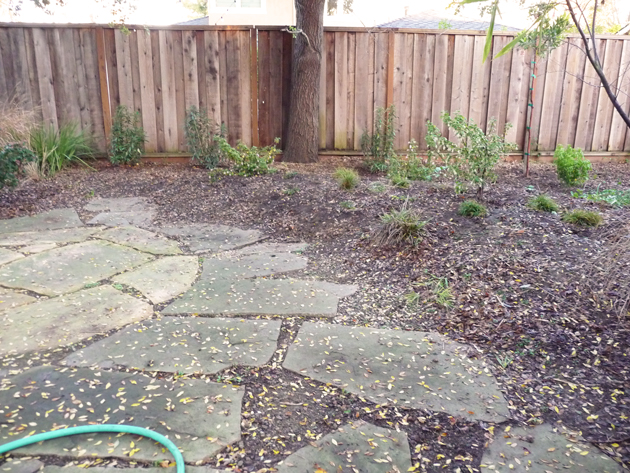California-Natives-with-Flagstones