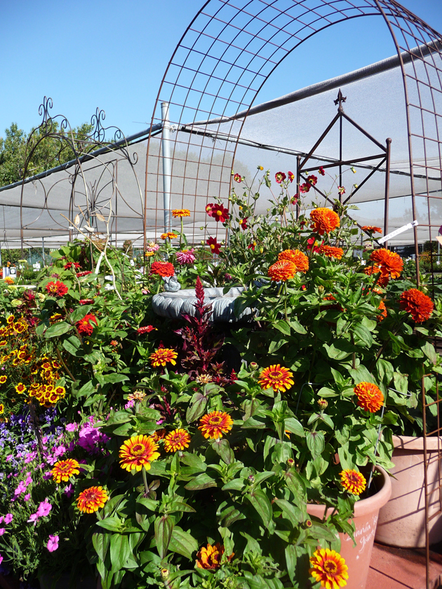 Annie's-Annuals-Display-with-Pergola