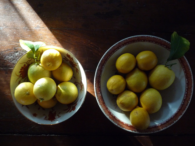 Lemons-in-Chinese-Bowls