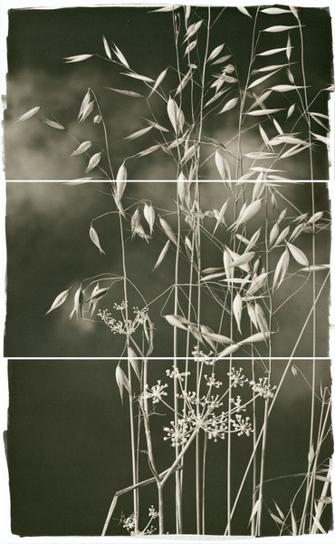 Valley Grasses I Brigitte Carnochan