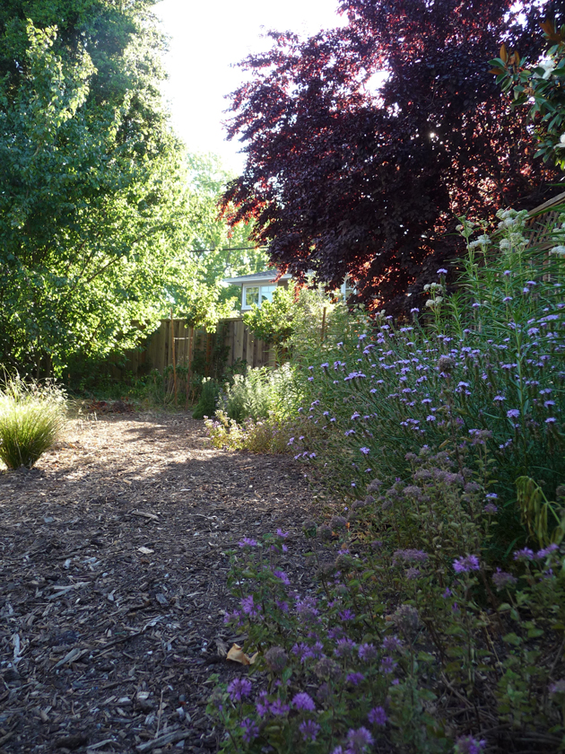 Border-with-Coyote-Mint-and-Vervain
